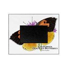 California Dog-Face Butterfly Picture Frame