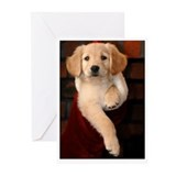 Golden Puppy Christmas Stocking Cards (blank)