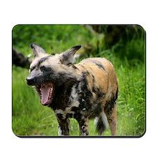 African wild dog 7 Mousepad