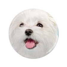 "Cute Maltese 3.5"" Button"