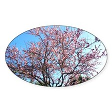 Spring Cherry Blossoms Decal