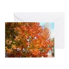 Fall leaves changing Greeting Card