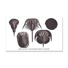 Trilobites Rectangle Car Magnet