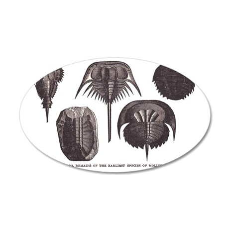 Trilobites 35x21 Oval Wall Decal