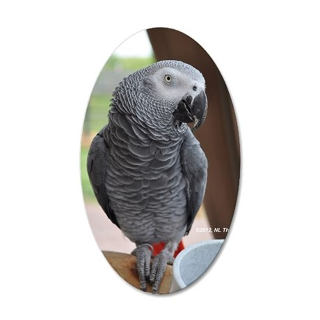 Congo African Grey 35x21 Oval Wall Decal
