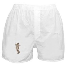 Cute Flying squirrel Boxer Shorts
