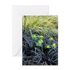 Winter aconite (Eranthis hyemalis) Greeting Card