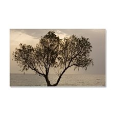 Tamarisk tree Car Magnet 20 x 12