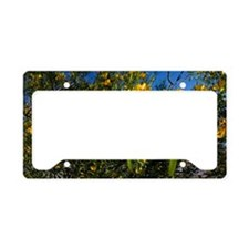 Sticky Cassia (Senna glutinos License Plate Holder