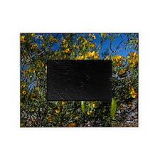 Sticky Cassia (Senna glutinosa) Picture Frame