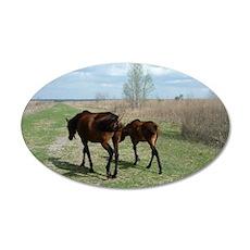 Payne's Prairie Wild Horses  35x21 Oval Wall Decal