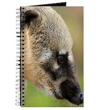 South American coati Journal