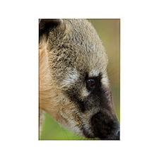 South American coati Rectangle Magnet