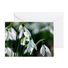 Snowdrop (Galanthus sp.) Greeting Card