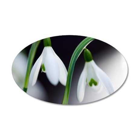 Snowdrop (Galanthus nivalis) 35x21 Oval Wall Decal
