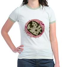 Small lymphocyte, TEM T