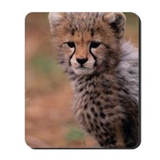 Cheetah cub, Masai Mara National Reserve Mousepad