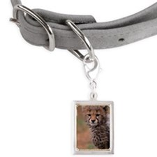 Cheetah cub, Masai Mara Nat Small Portrait Pet Tag