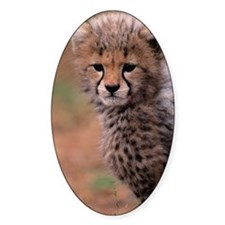 Cheetah cub, Masai Mara National Re Decal