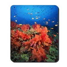 Coral and fish Mousepad