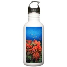 Coral and fish Water Bottle