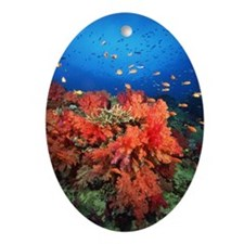 Coral and fish Oval Ornament