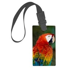 Scarlet macaw Luggage Tag