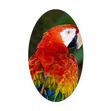 Scarlet macaw Oval Car Magnet
