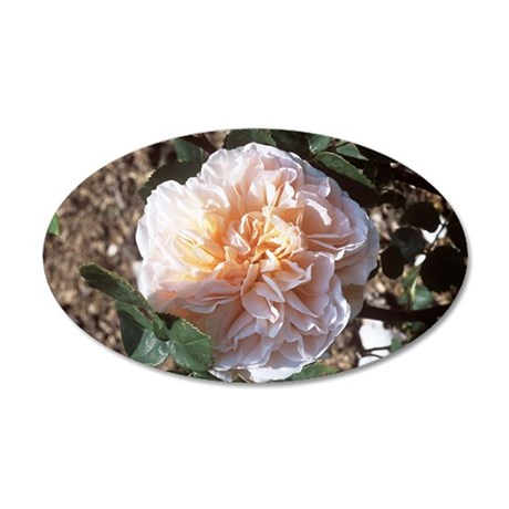Rose (Rosa 'Evelyn') 35x21 Oval Wall Decal