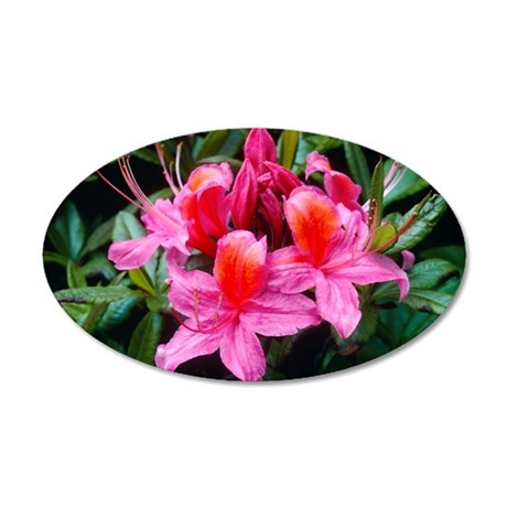 Rhododendron 'Fanny' 35x21 Oval Wall Decal
