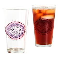 Protea plant stem, light micrograph Drinking Glass