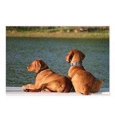 Vizsla Postcards by bcj19 (Package of 8)