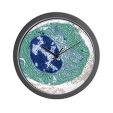 Plasma cell, TEM Wall Clock
