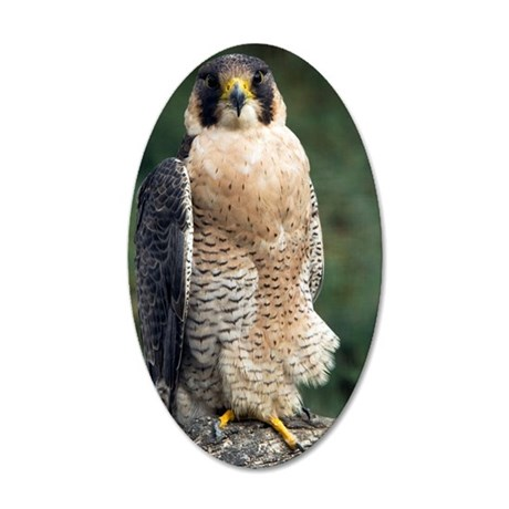 Peregrine Falcon 35x21 Oval Wall Decal