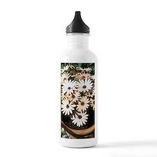 Osteospermum 'Serena' Water Bottle
