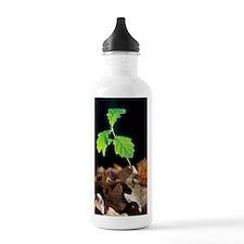 Oak tree (Quercus sp.) Water Bottle