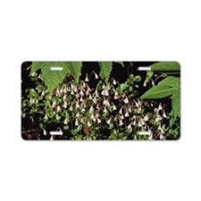 Twinflower blooming on fore Aluminum License Plate