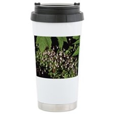Twinflower blooming on forest f Ceramic Travel Mug