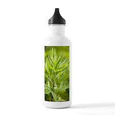 Mugwort (Artemisia vul Water Bottle