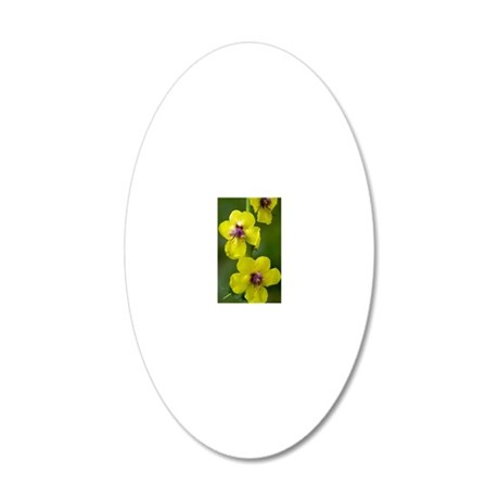 Moth Mullein (Verbascum blat 20x12 Oval Wall Decal