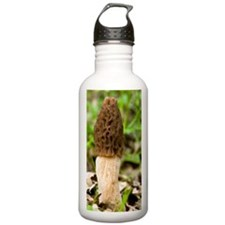 Morel (Morchella escul Water Bottle