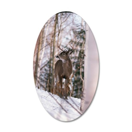 Deer buck standing in forest 35x21 Oval Wall Decal