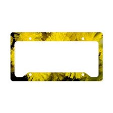 Mimosa (Acacia dealbata subal License Plate Holder