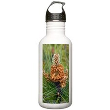 Maritime pine flowers  Water Bottle
