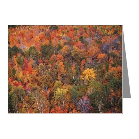 Picturesque Autumn forest Note Cards (Pk of 10)