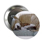 Jack Greyhound Button