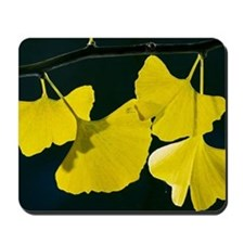 Maidenhair Tree (Ginkgo biloba) Mousepad