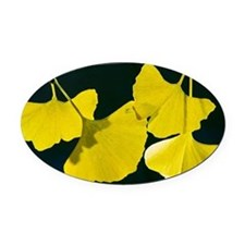 Maidenhair Tree (Ginkgo biloba) Oval Car Magnet