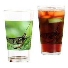 Male mayfly Drinking Glass