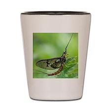 Male mayfly Shot Glass